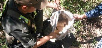 50 kilos de marihuana escondida entre la vegetación, cerca de Pirané