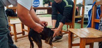 Prosigue operativo de vacunación gratuita de mascotas y castraciones a bajo costo
