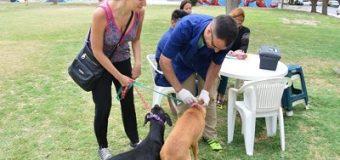 Siguen los operativos de vacunación de mascotas