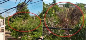 Secheep mutiló árboles de todo un barrio desoyendo ordenanza municipal