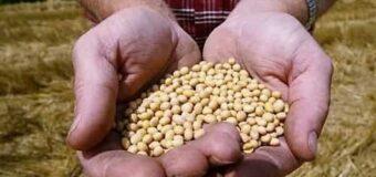 La soja aumenta y el maíz toca picos históricos