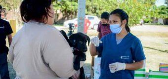 El Municipio fortalece operativos gratuitos de desparasitación y vacunación de mascota